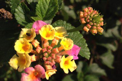 お花2016haru