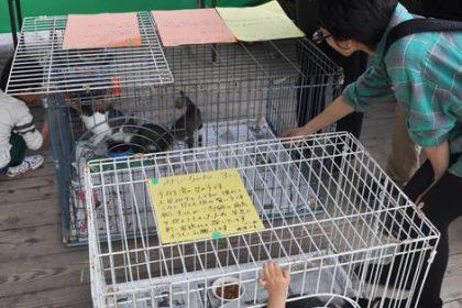 ネコさん譲渡会photo-1
