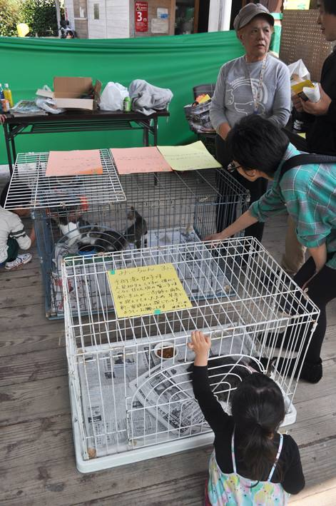 7/24(日)in宜野湾「保護団体ミュウさん・ねこ譲渡会」サポートにいきます