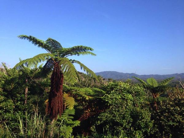 沖縄、やんばるの森、東村・高江へ